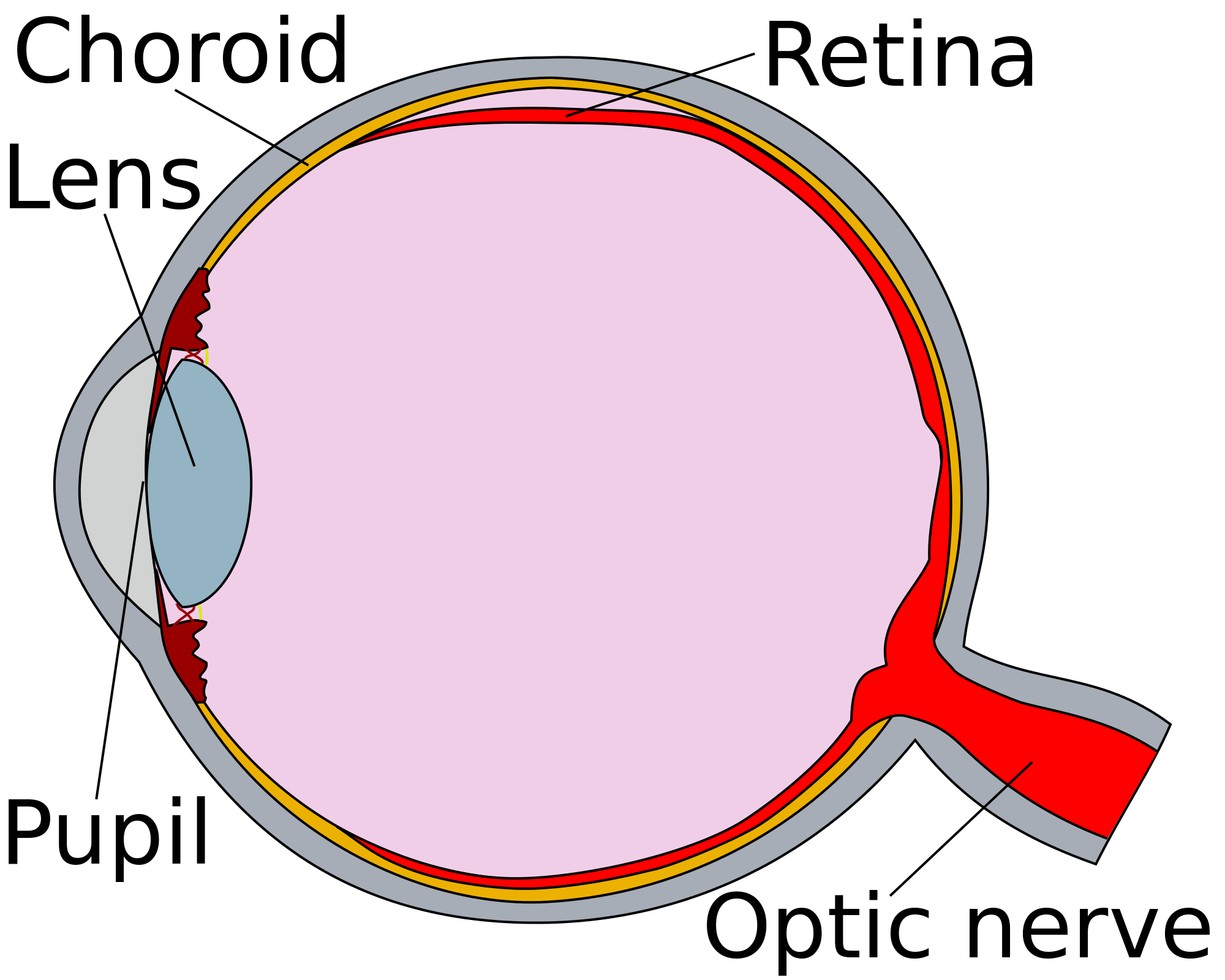 Eye Diagrams For Kids Anatomy Of The Human Car Accident Head Injury Claims Get Compensation You Deserve