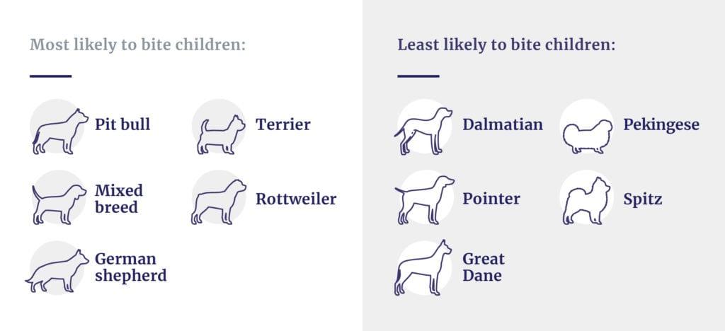 Dog breeds likely to bite children